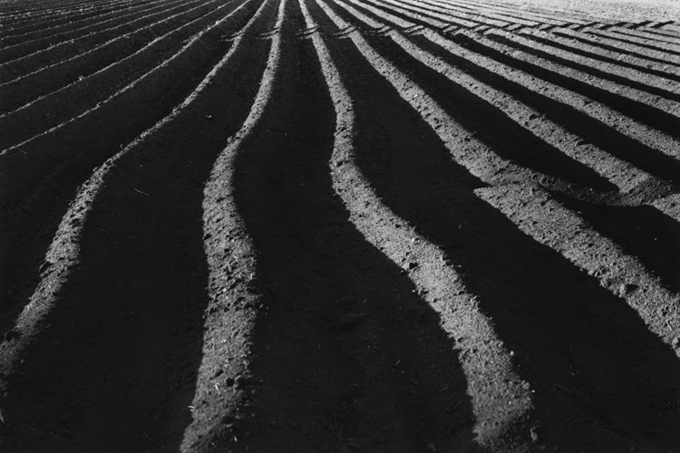 DirtRows.jpg
