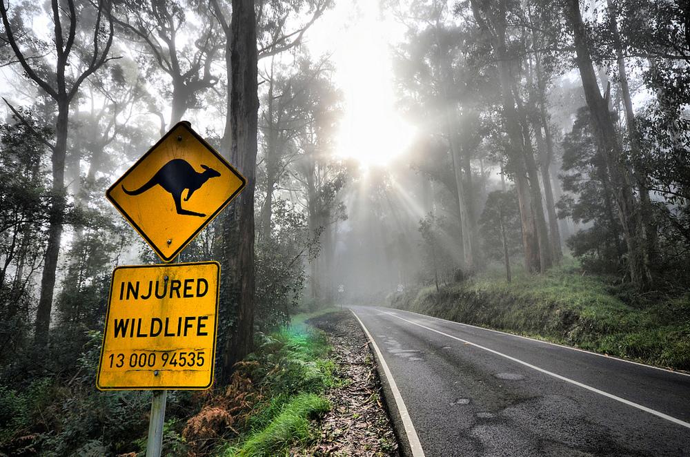 Dandenong Ranges, Victoria, Australia