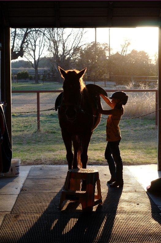 Horse Preparation
