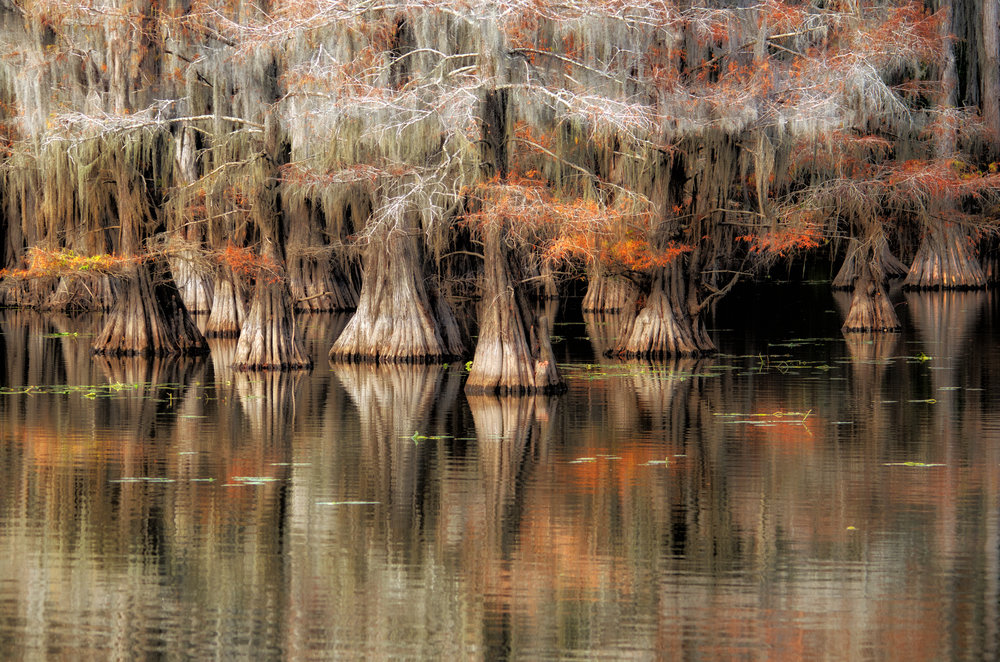 Colors of Caddo Lake, Texas