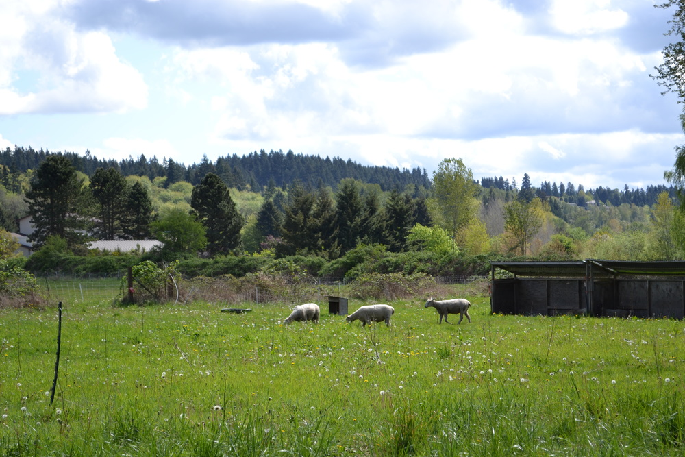 Green (21) Acres is the place to be. Farm living is the life for me. Land spreading out so far and wide; keep Seattle, just give me that countryside.
