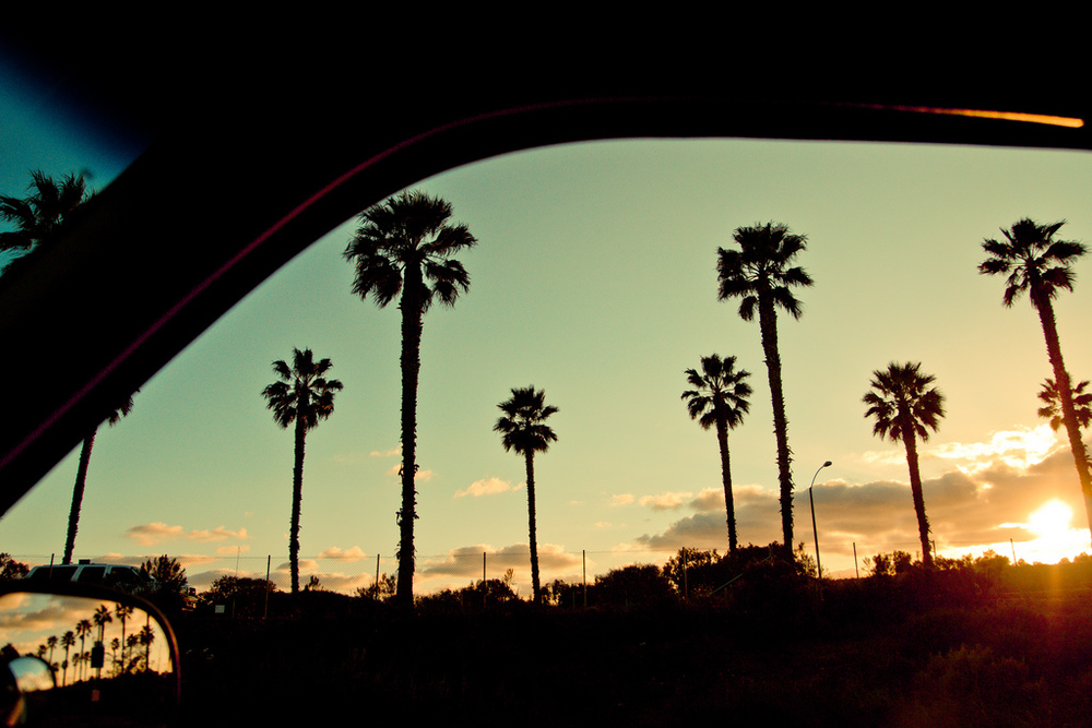 """Palms at Sunset"" taken by Eric May"