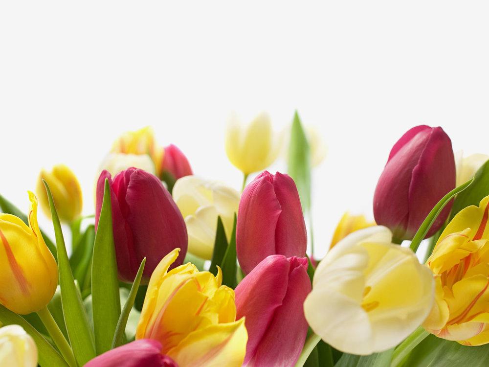Easter+spring+tulips.jpg