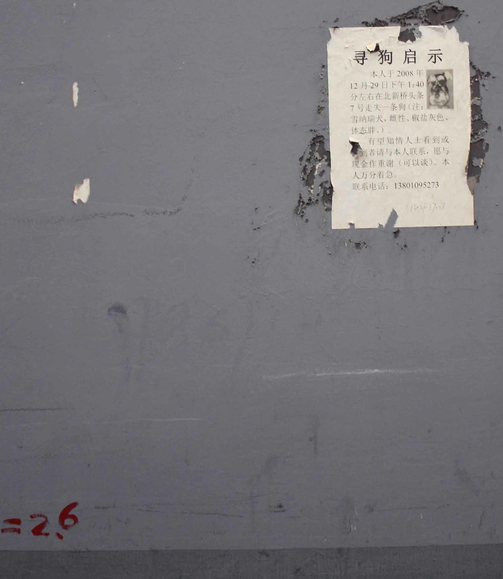 Missing Dogs of Beijing, Photograph(s) Beijing, China 2010-