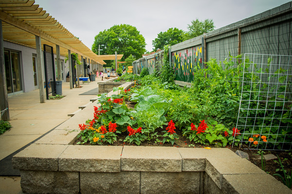 The Seed To Table Program Fosters Healthy Eating And Engages Children And  Families In Gardening And Outdoor Learning. UCCCu0027s Garden Is Integrated  Into Our ...