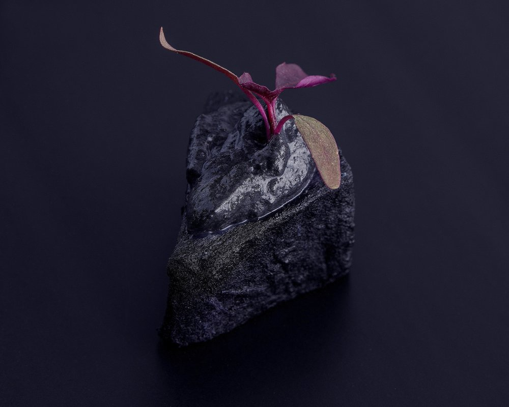 Smoked charcoal yucca with squid ink mousse and purple micro flowers