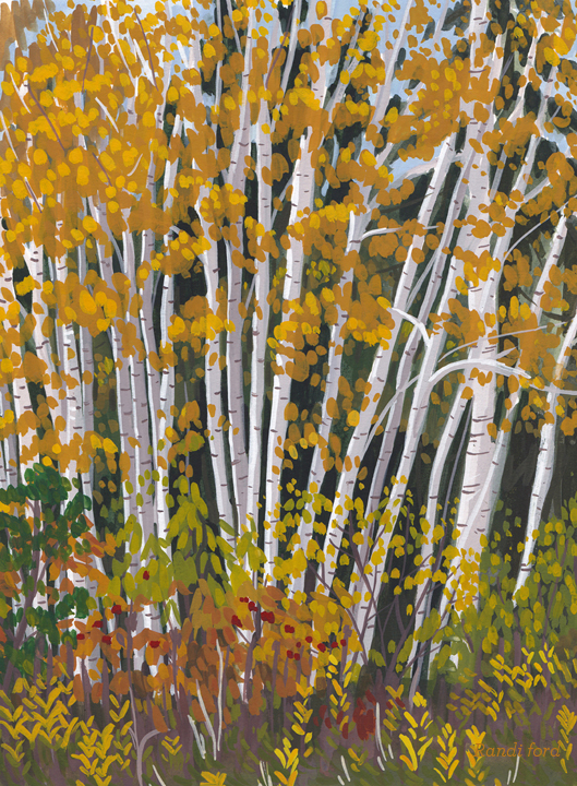 fallBirchTrees.jpg