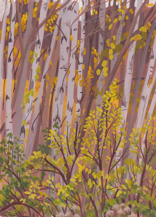 orange birches.jpg