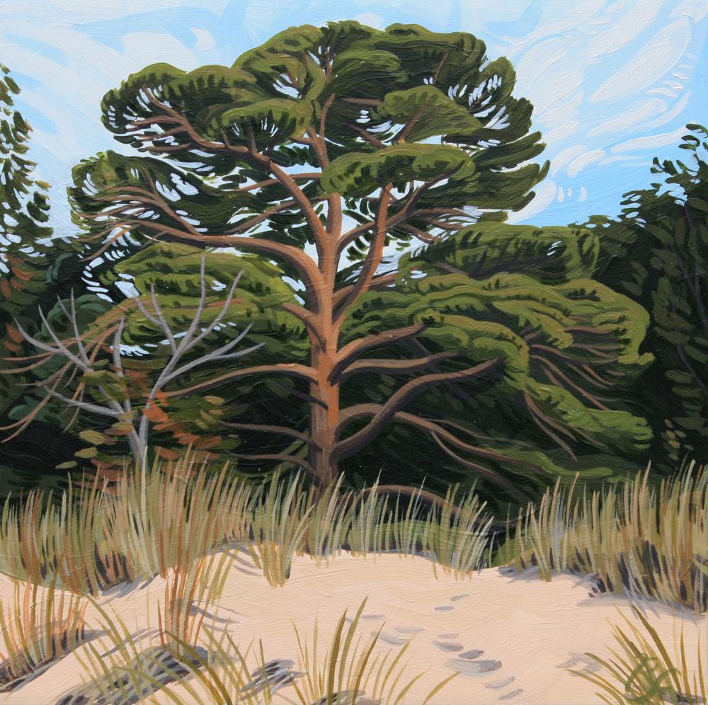 pine2.jpg