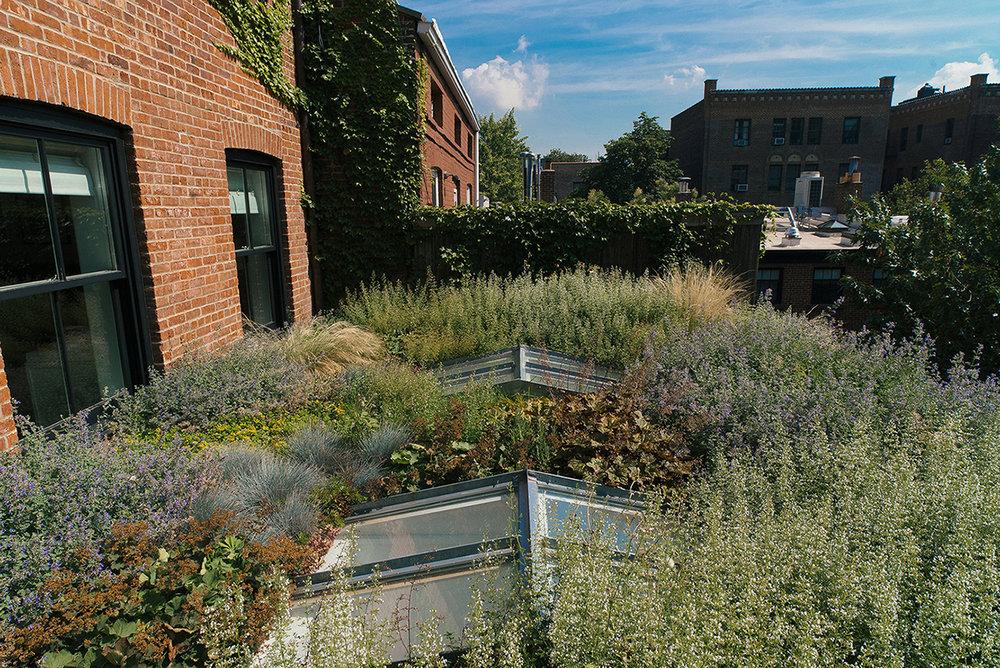 BK garden_7_150.jpg