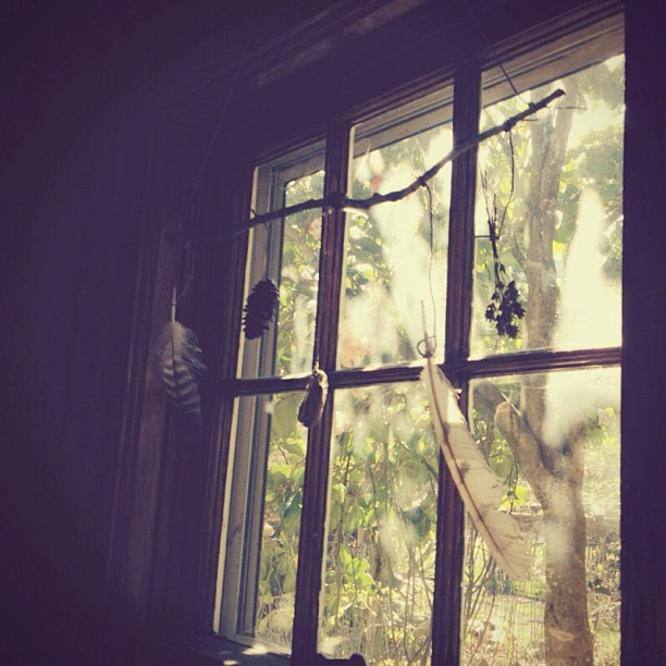 feathers in window.jpg