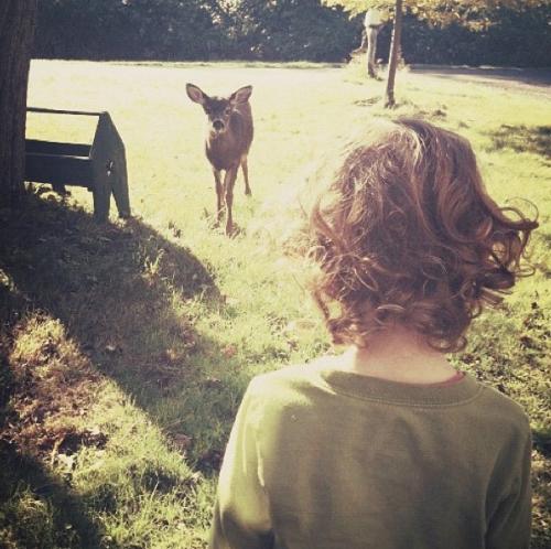 deer5-500x498.png
