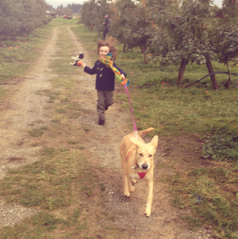 cedar & salish running in an apple orchard