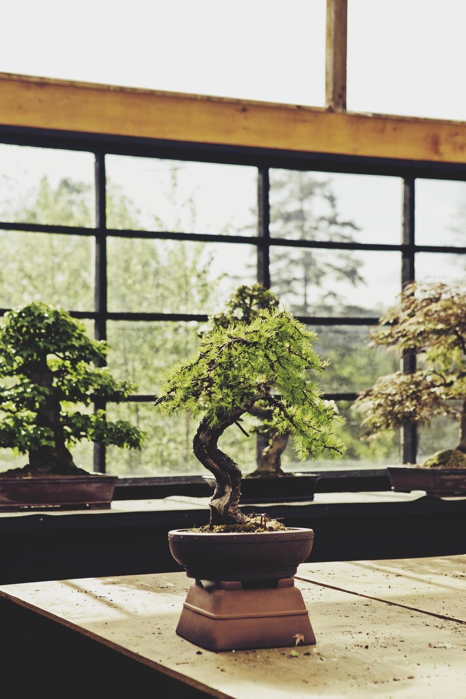 bonsaï-126.jpg