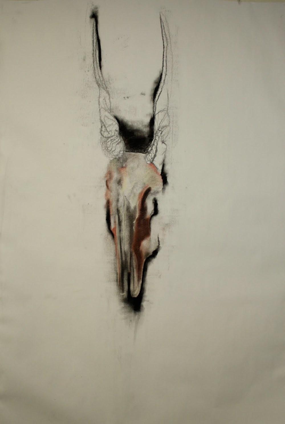 skull,_charcoal_on_paper,_3'x6'.jpeg