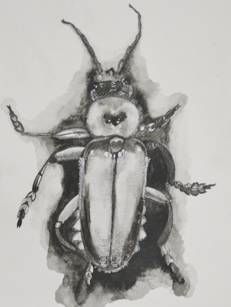 01 beetle 9x12.jpg