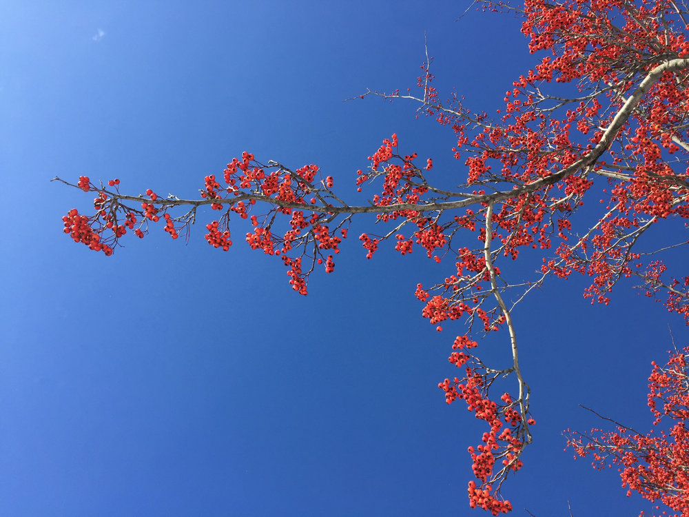 Chloe Philip Hawthorn Tree.jpg