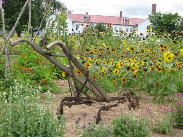 Sunflowers .jpg