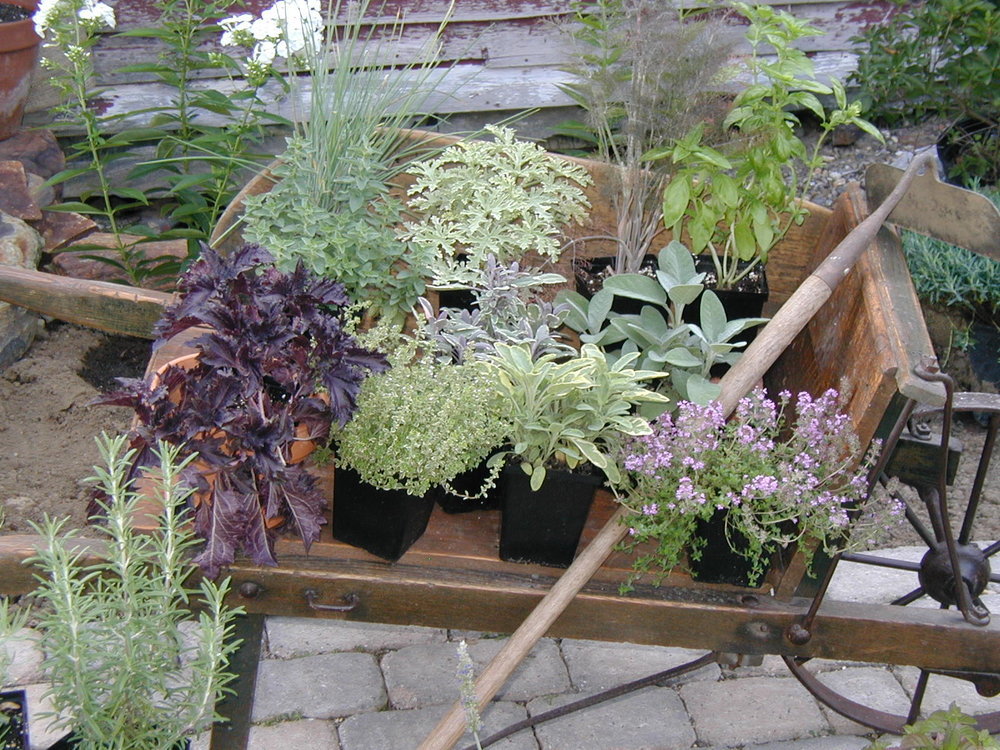 Herbs - Wheelbarrow.jpg