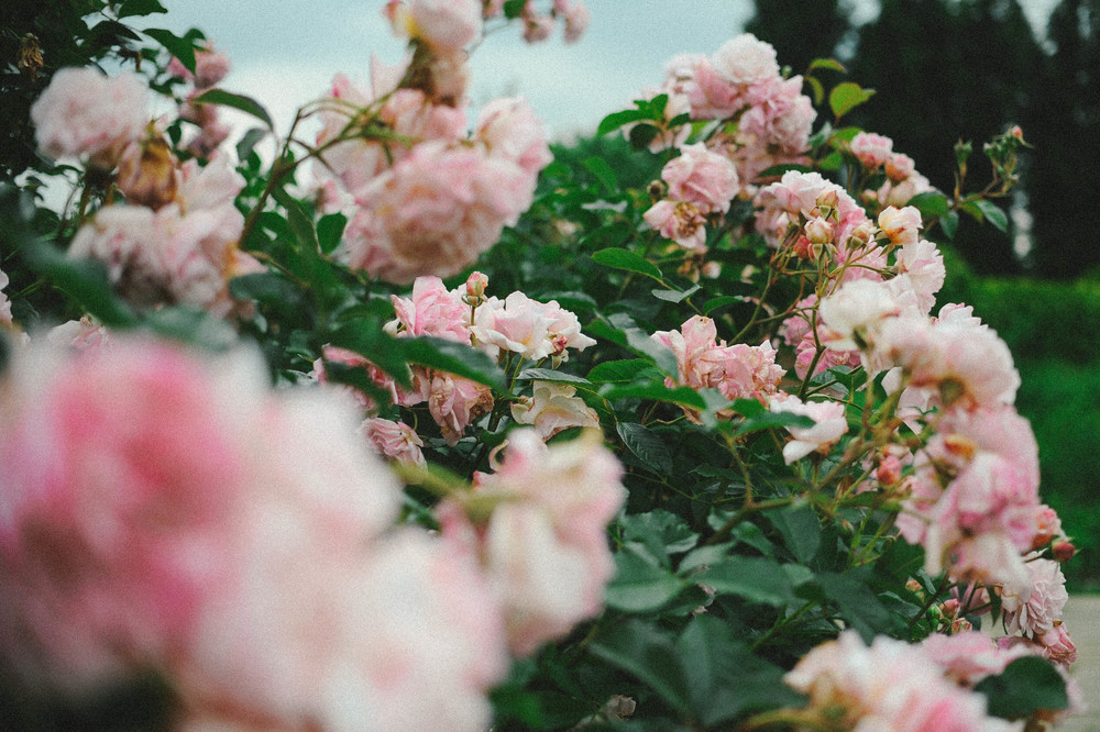 flowers5925_.jpg