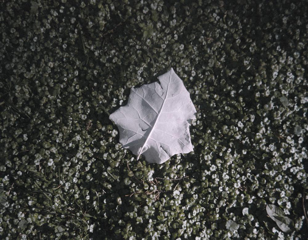 Lone Leaf.jpg