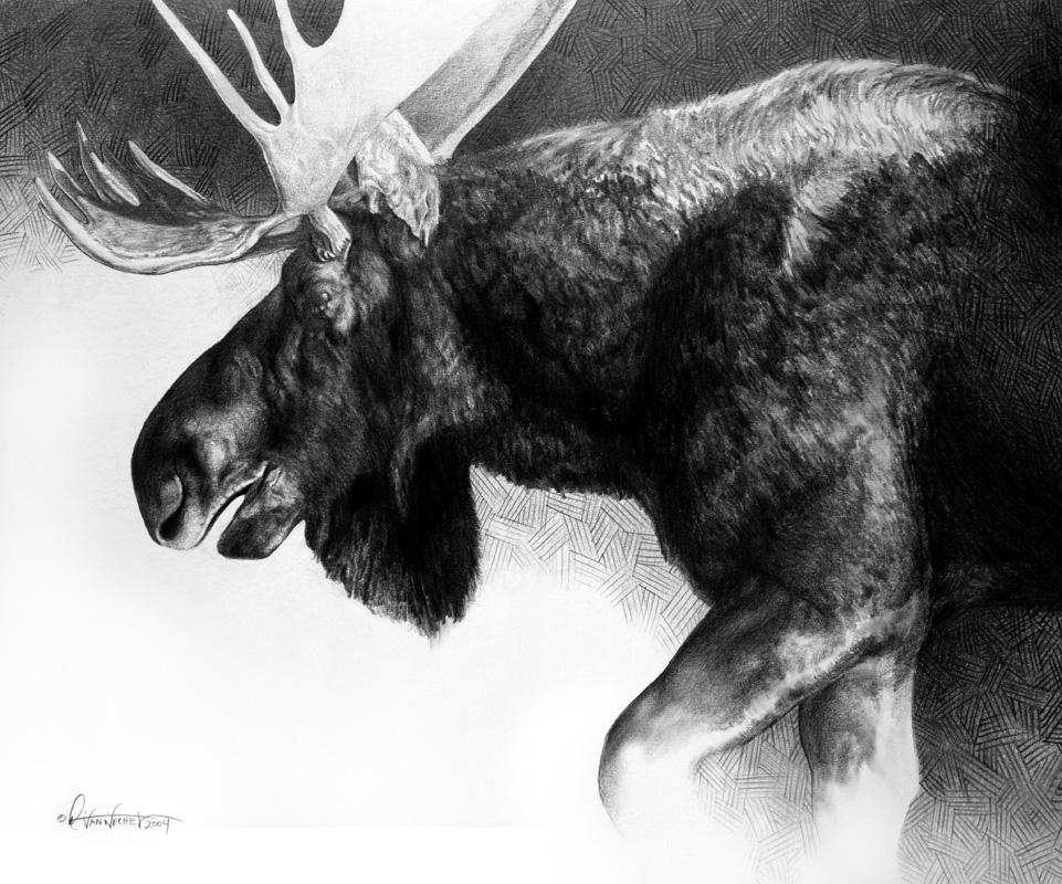 Bull Moose Study