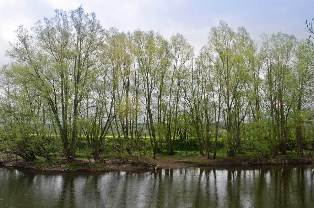 river-opposite.jpg