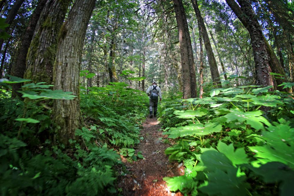 Mindful hiking