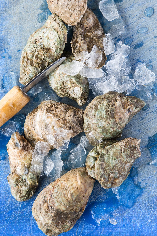 amy_sinclair-oyster-1.jpg