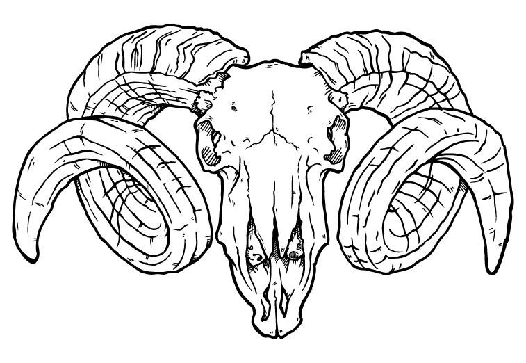 Ram Skulls Drawings Ram Skull Front View Ram