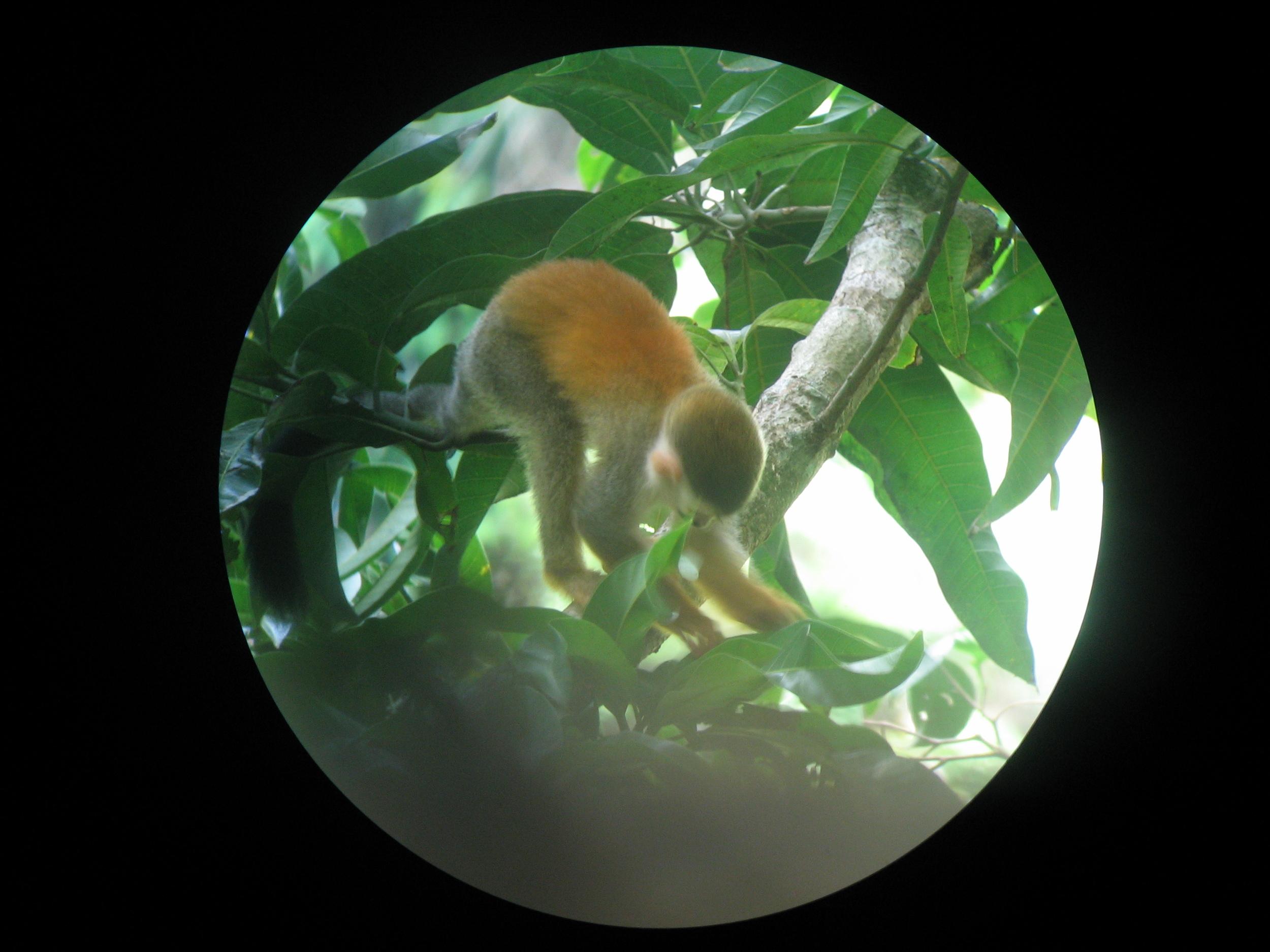 Wildlife viewing in Manuel Antonio Park