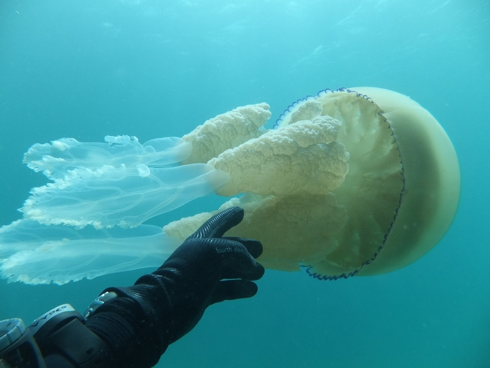 Jellyfish 7 compressed.jpg