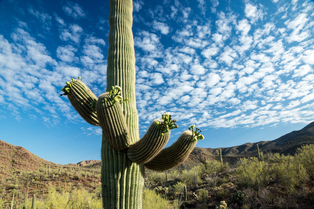 photodune-4839660-iconic-southwest-desert-scene-m.jpg