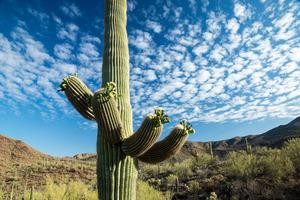 Pima County, AZ