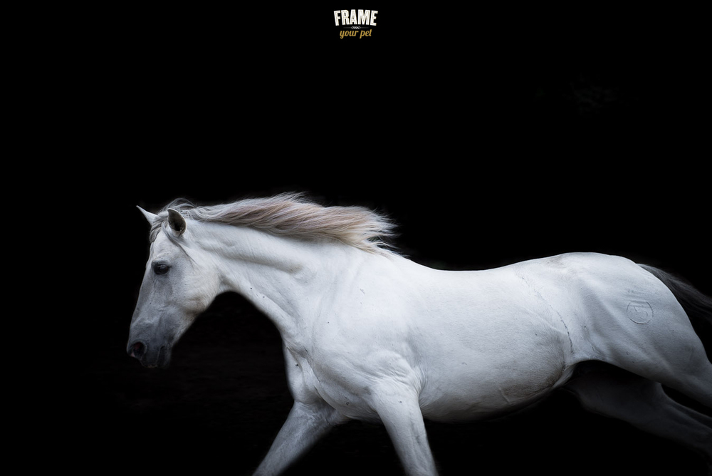 As you can imagine, this shot was done outdoors. It would have been impossible to have a white horse running in a studio :)