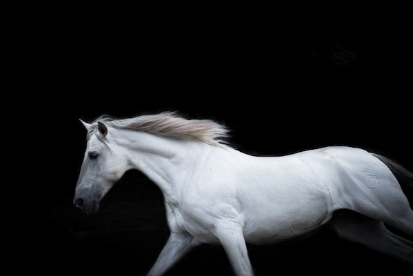 Photo by Frame Your Pet. This photo is part of a commissioned work for CAVA Horse training center, Spain.