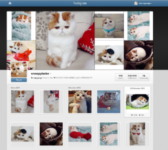 Snoopy the cat has more than 200,000 followers in his Instagram profile.  Don't underestimate the power of Instagram or other social media platforms like Tumblr.  Instagram has 90 million users that post 40 million photos per day and tap 8,500 likes per second  (source: Instagram).  Tumblr has around 113.5 million posts a day!