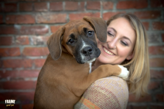 Boxer puppy with her mom during his puppy session with Frame Your Pet Photography.