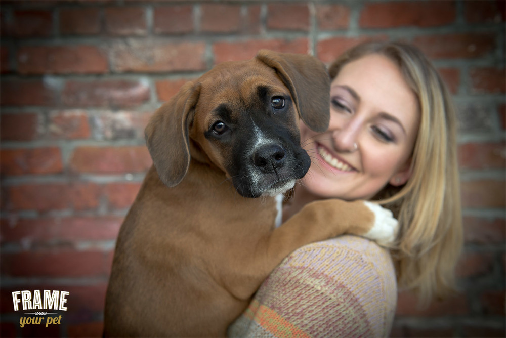 Owner and boxer puppy interacting.
