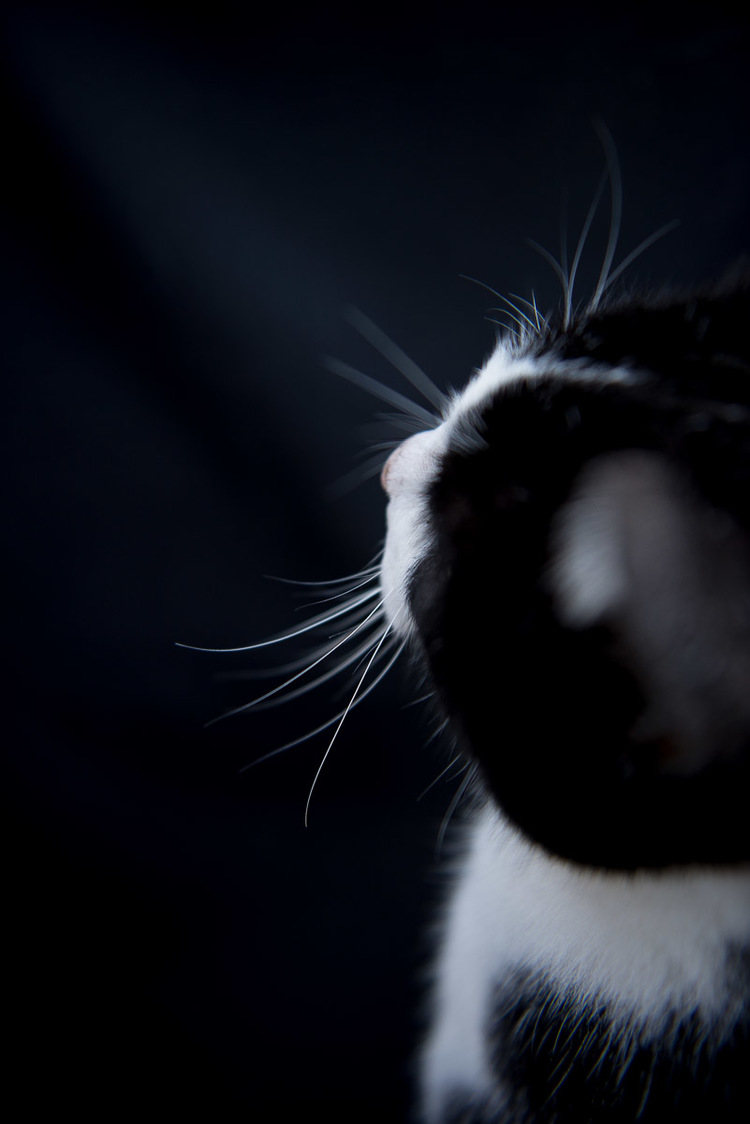abstract-photo-portrait-of-black-cat.jpg