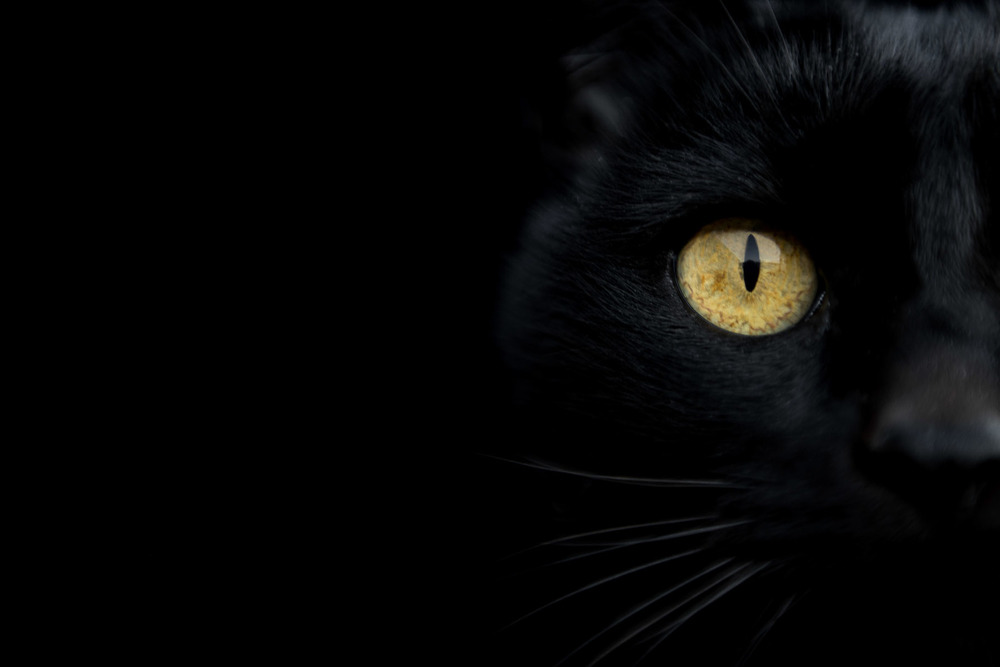 awesome-photo-of-black-cat-in-dark-with-yellow-eyes.jpg