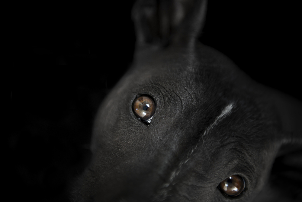 macro-photo-of-dog-eye-with-natural-light.jpg