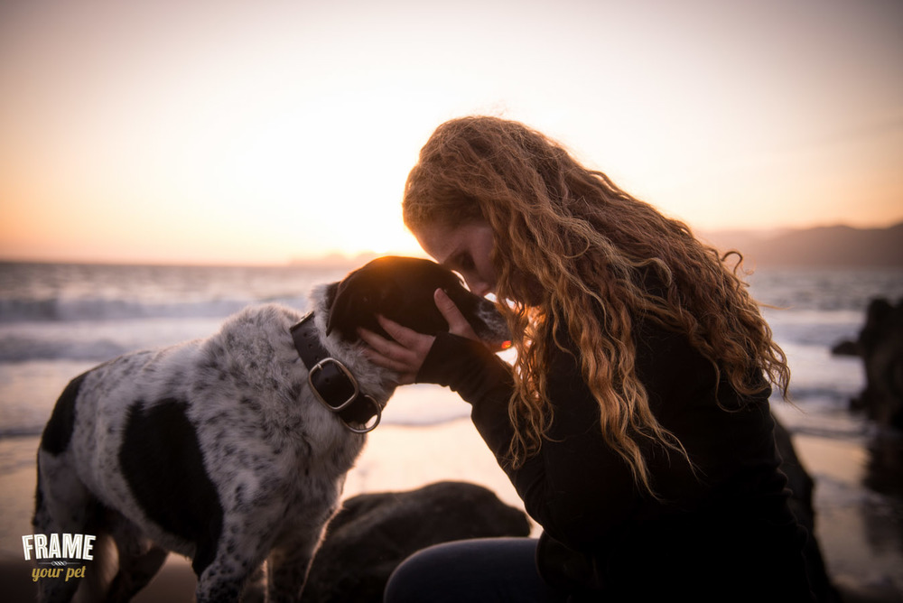 dog-photography-collie-photos-baker-beach-at-sunset-pet-and-owner
