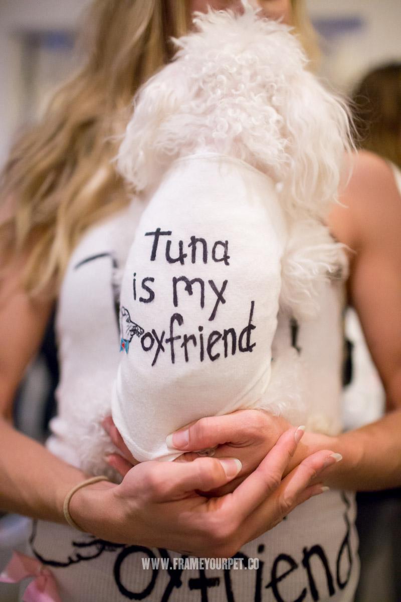 Tuna The Chiweenie In A Wig