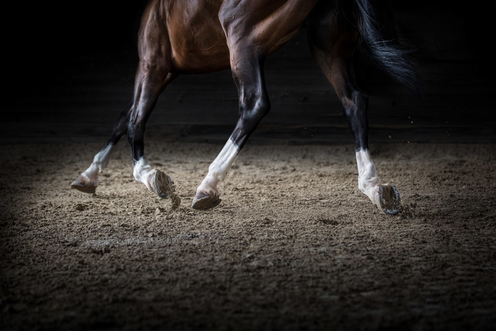 equine-photographer-horse-photography-los-angeles-horse-photos-4.jpg