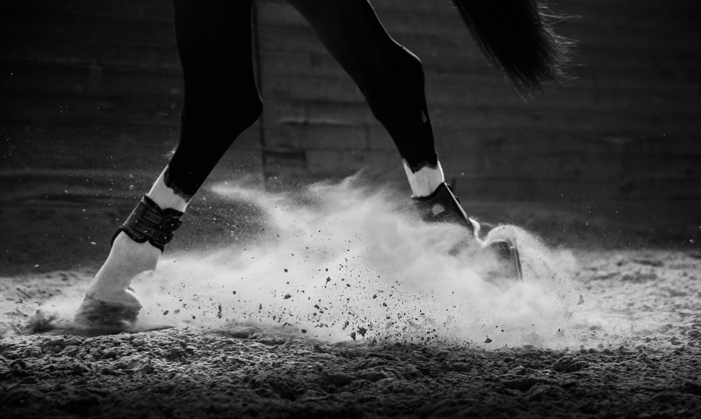 equine-photographer-horse-photography-los-angeles-horse-photos-18.jpg
