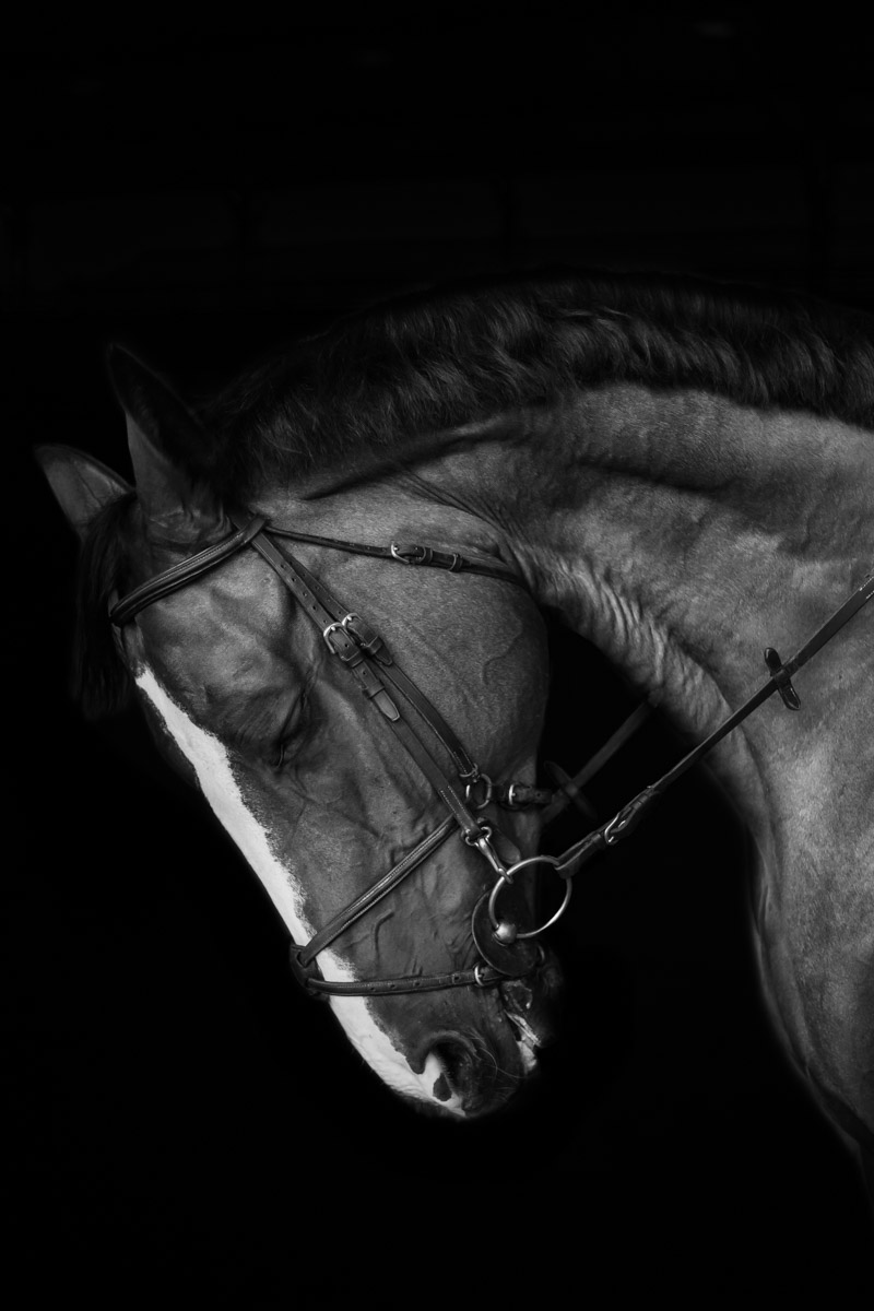 equine-photographer-horse-photography-los-angeles-horse-photos-32.jpg