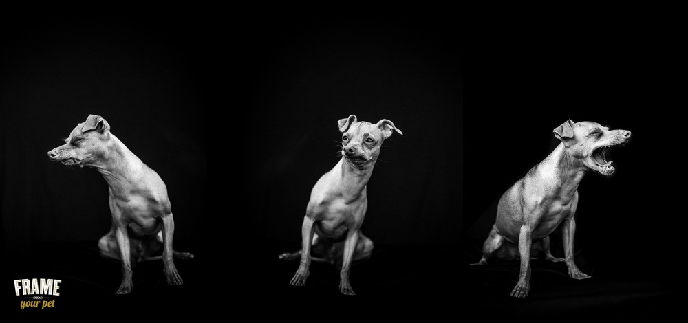 dog-photographer-santa-monica