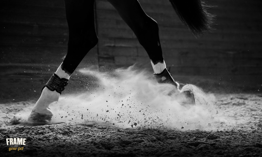 detail of horse hoof during dressage