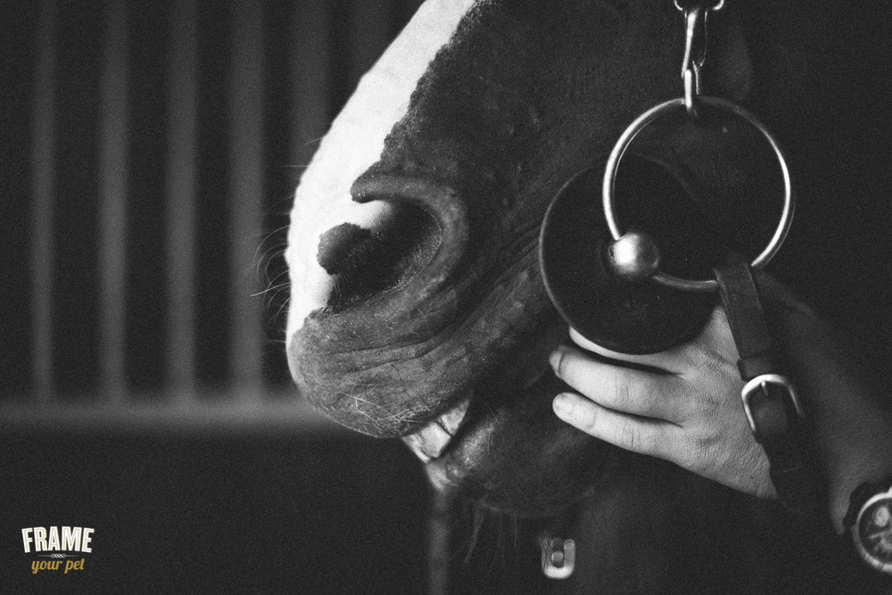 vintage horse photography